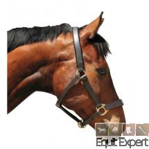 Licol cuir cheval